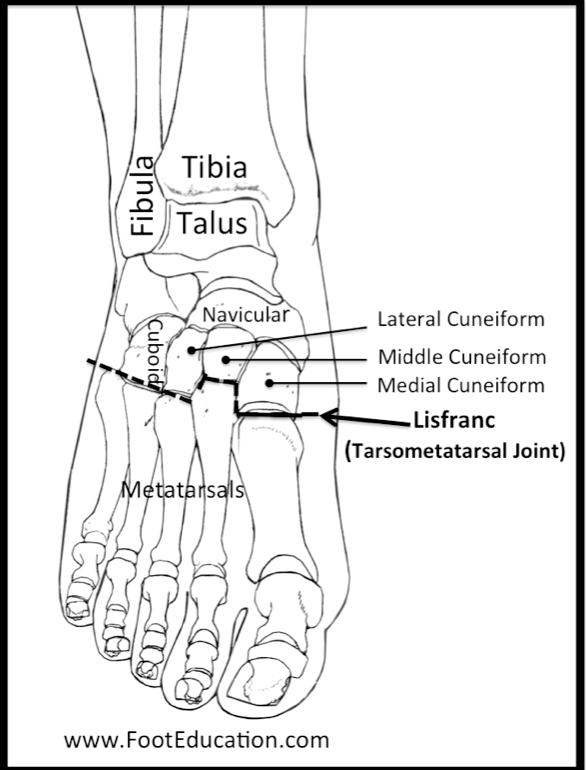 Lisfranc Joint anatomy