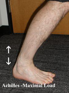 Achilles Maximum Load during walking - Heel Rise