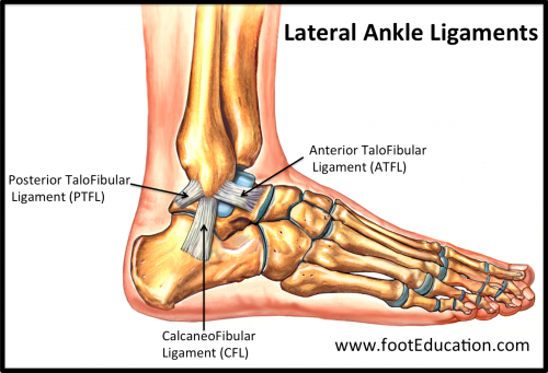 The Lateral Ligaments of the Ankle