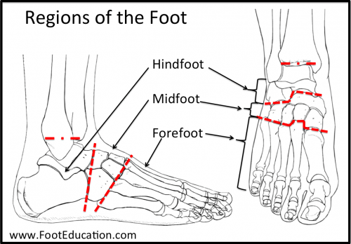 Regions of the Foot