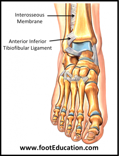 Ligaments of the Upper Ankle