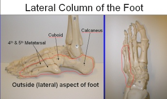 Lateral Column of the foot